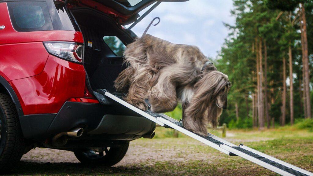 Внедорожники Land Rover начали оснащать душем для собак